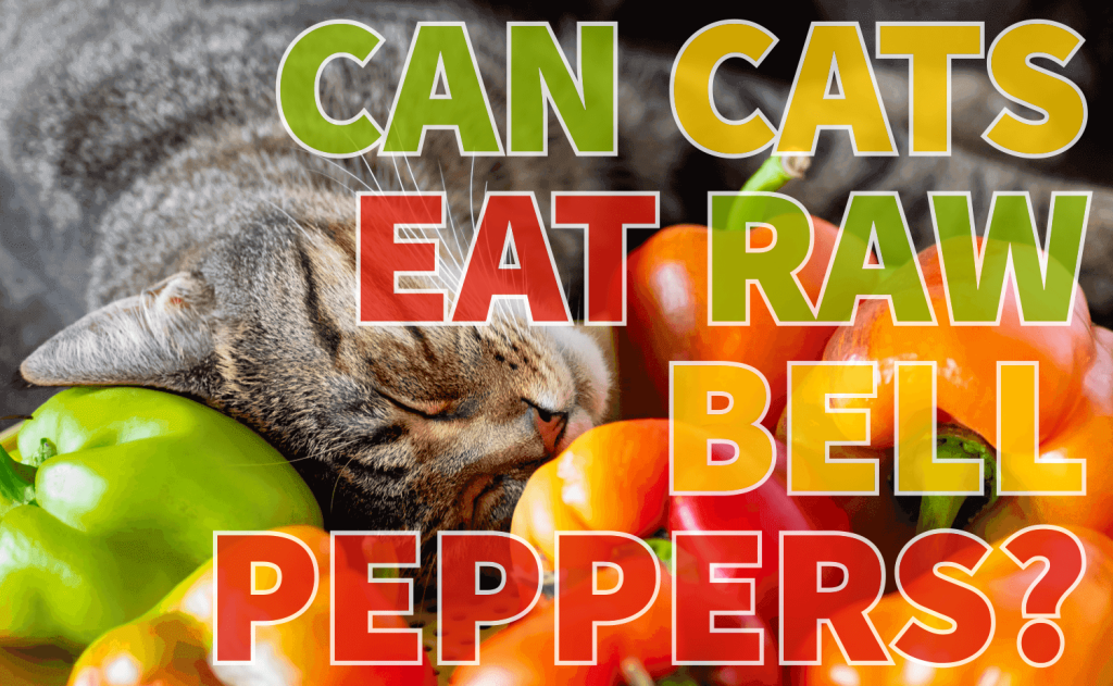 Can Cats Eat Raw Bell Peppers?