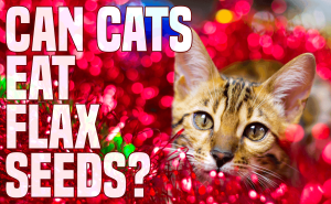 Can Cats Eat Flax Seeds?