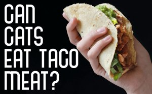 Can Cats Eat Taco Meat?