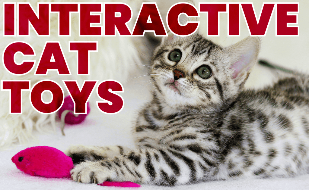 Interactive Cat Toys Your Cat Will Love