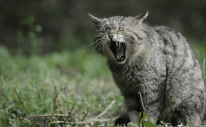 All About Elderly Cats
