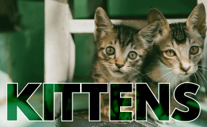 All About Kittens