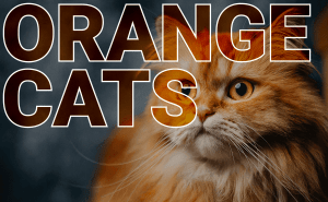 All About Orange Cats