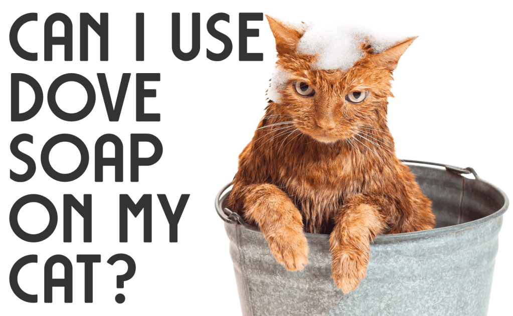 Can I Use Dove Soap on My Cat?