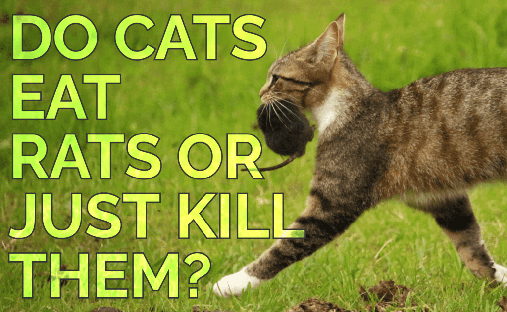 Do Cats Eat Rats or Just Kill Them?