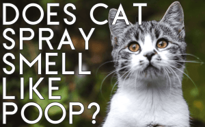 Does Cat Spray Smell Like Poop?