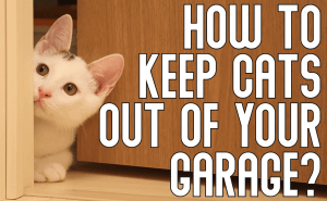 How To Keep Cats Out of Your Garage