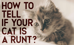 How To Tell if Your Cat Is a Runt