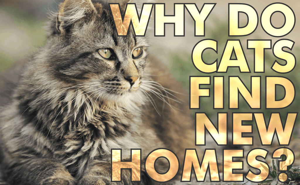 Why Do Cats Find New Homes?