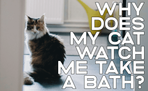 Why Does My Cat Watch Me Take a Bath?