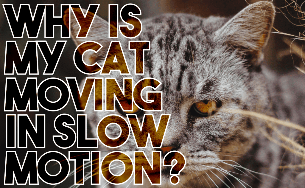 Why Is My Cat Moving in Slow Motion?