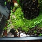 Zoo Med 18 X 18 X 24 Reed Frog Vivarium Caudata Org Newts And Salamanders Portal
