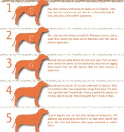 5 point dog body condition scoring chart [ 1275 x 1651 Pixel ]