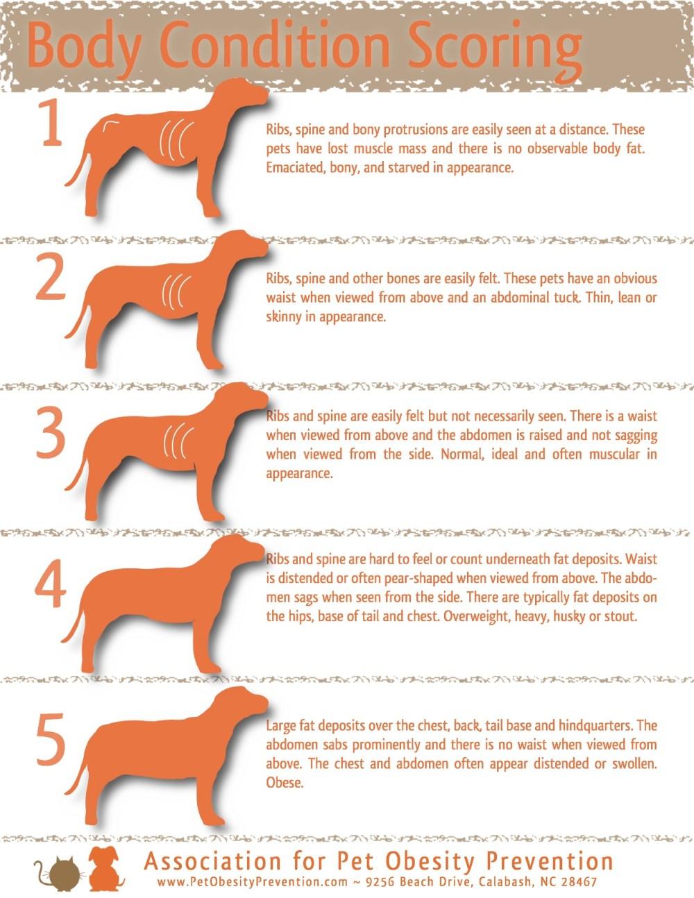 medium resolution of 5 point dog body condition scoring chart