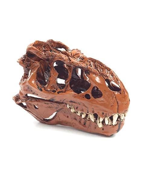 Dinosaurus Rex  Skelet Trex kleur 2 kopen op CaveTown