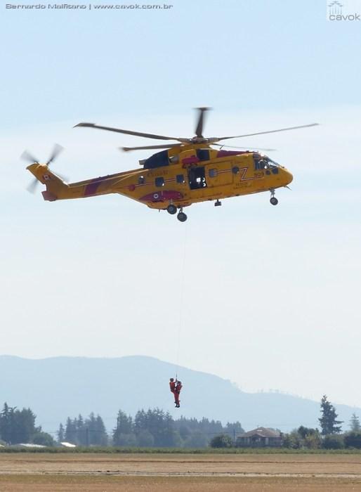 Cormorant - rescue - Abby16Malfitano