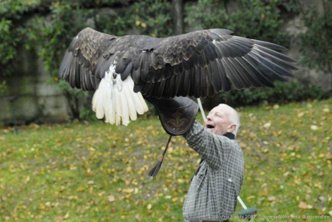 falconeria2