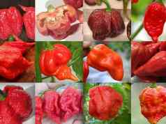 12 Hottest Peppers