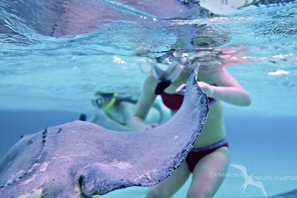 stingray swimming past girls on a private boat charter in grand cayman