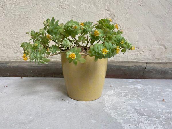 Matera Con Planta Cono. Amarillo Brillante. (M)