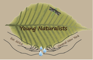Young Naturalists: The Buzz About Pollinators