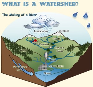 Young Naturalists: Watershed