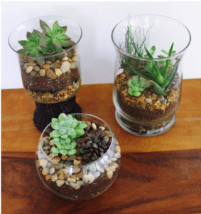 Crafter-noons & Evenings: Terrariums