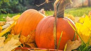 Pumpkin Pick Up