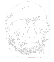 Homo Sapiens: Child of the Ice Age