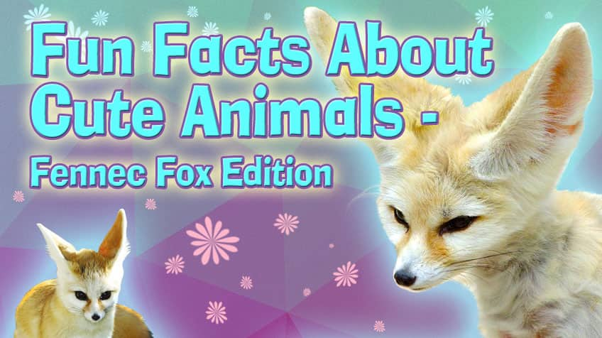 fun facts about cute