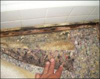 Is Black Mold On Carpet Dangerous - Carpet Vidalondon