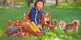 CBD For Kids & Pets