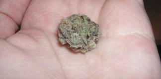 Cannabis Used Medicinally