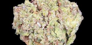 Green Gum High CBG Hemp Flower (Empire Wellness)