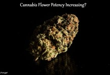 Cannabis Flower Potency Increasing