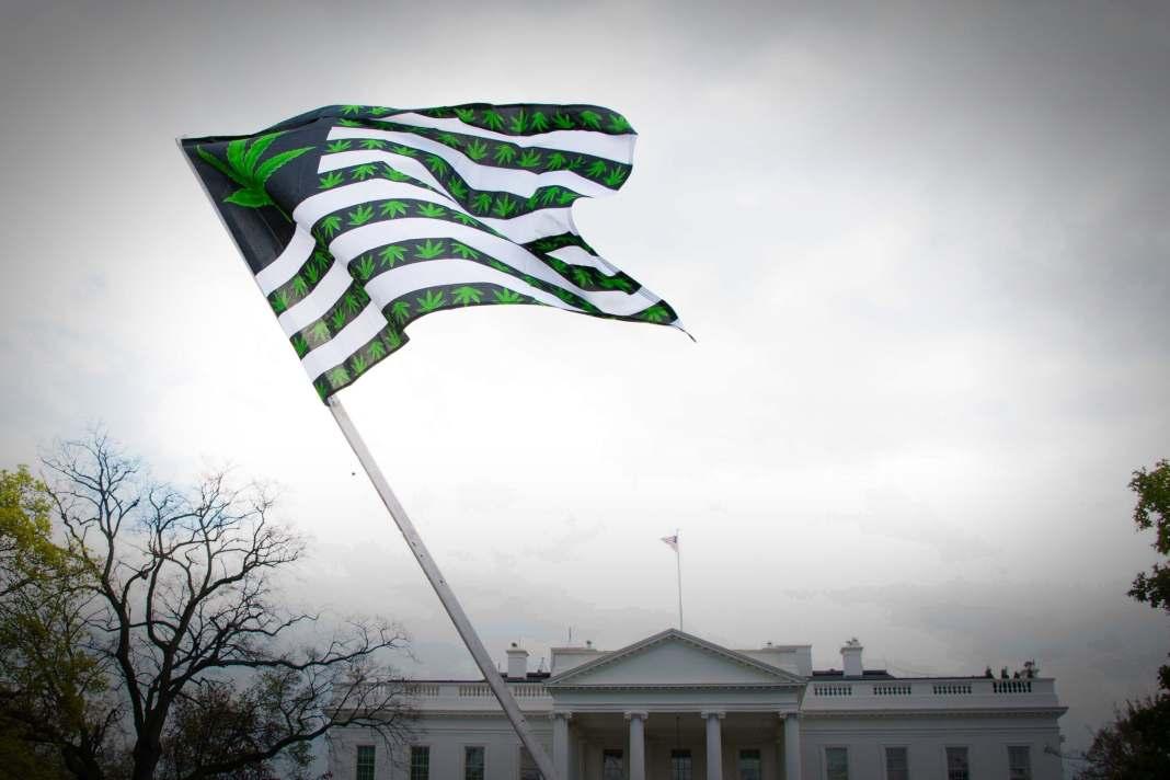 democratic cannabis