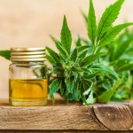 Hemp-cultivation-cbd-cbdtoday