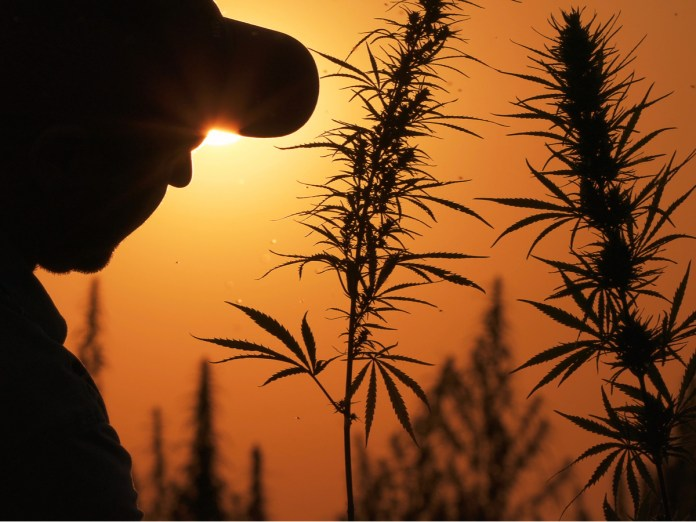 USDA-Hemp Production-CBD News-CBDToday