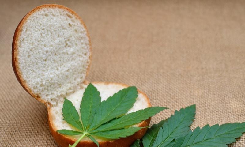 Cannabis Sandwich