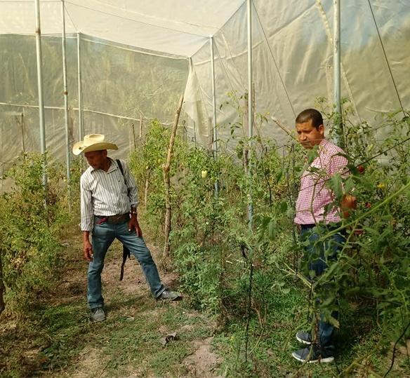 Photo of Salvadoran men in a green house