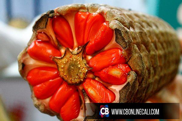 Chigua, manjar del manglar de la costa pacifico