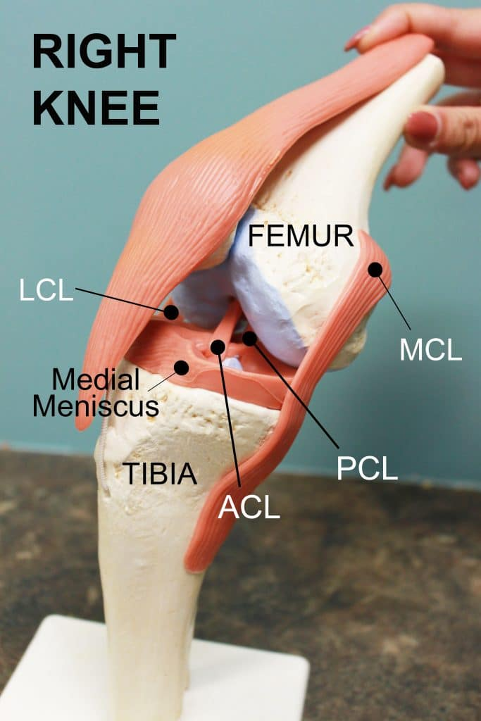 bones in your foot diagram sentence diagramming adjectives i tore my acl... now what? - coury & buehler physical therapy
