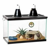 Jungle Designer Leopard gecko for sale online baby jungle ...