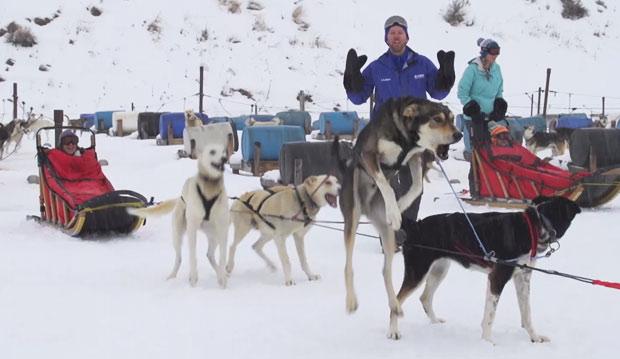 web-dog-sled_324139