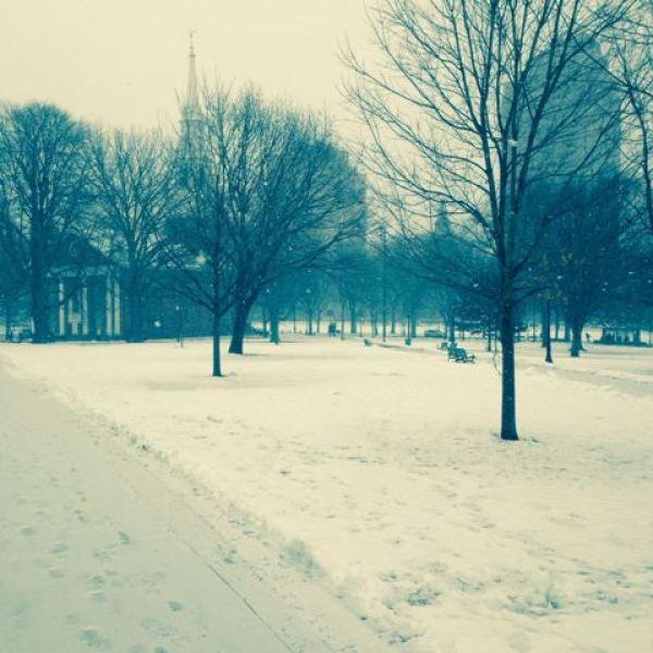 New Haven snow_84187