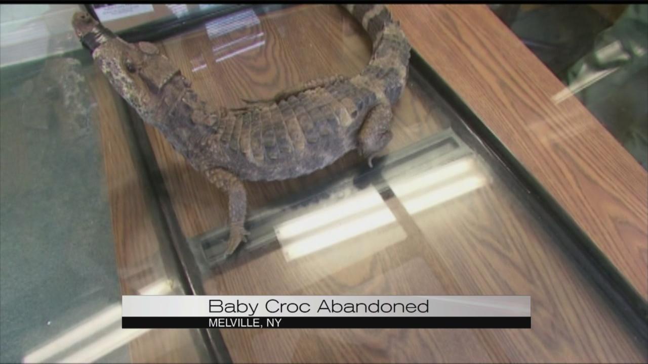 baby croc_109681