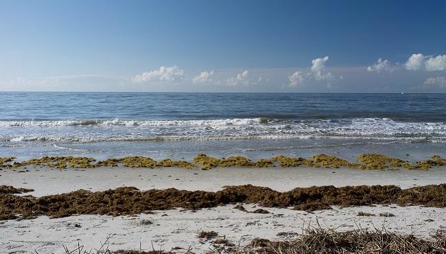 Ocean Morning_105747