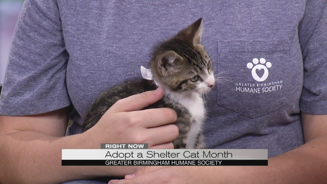 shelter cat month_282778