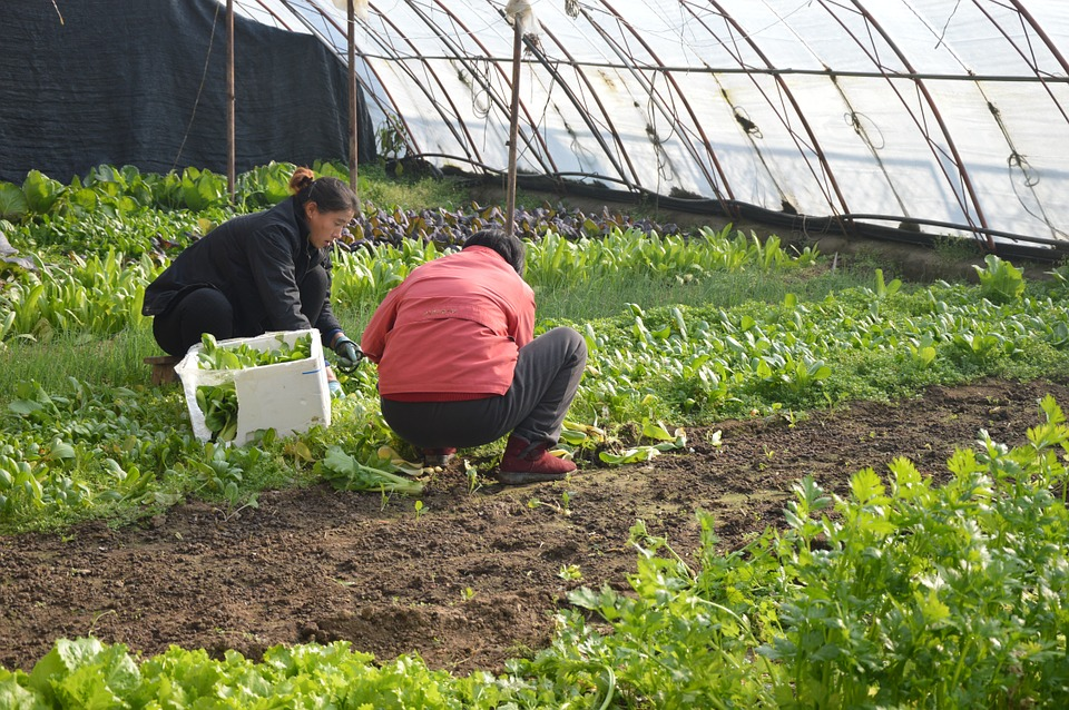 farmers-661784_960_720_1529451482771.jpg