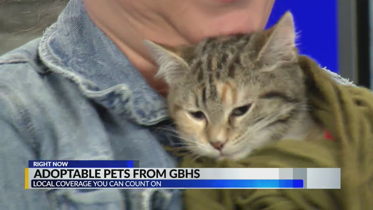 Adoptable Pets From GBHS